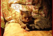 Cicák úton - útfélen. / Mindenféle cicákról, akik az utamba kerűltek.