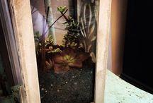 Terrariums, Succulents, and More / Love 'em!