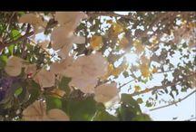 Videos / Santorini Videos