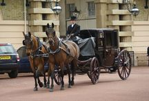 carriage driving and harness