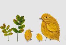 φυλλα