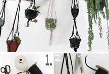 plants/outdoor