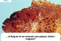 Roig / Cabracho / Aquí trobaràs curiositats sobre el roig / Aquí encontrarás curiosidades sobre el cabracho