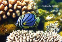 Euro-Divers World Wide / Scuba Diving