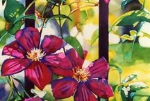 Paintings of Clematis / Beautiful prolific and showy summer flowers. They come in many colours and shapes.