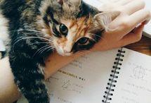 Kittens|