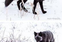 les animaux les plus rares