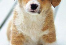 Beautifull dogs