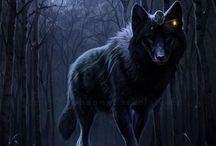 ¡Wolf..!