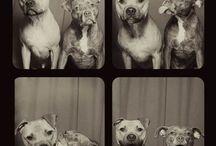 Köpekler