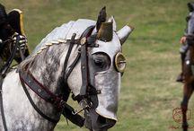 [REF] - Horses