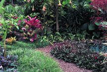 HAWAIIAN INSPIRED HOME / Hawaiian inspired landscaping, decor and life