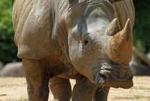 Rhino and Another.......