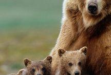 bears are my favorite!