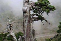 Nature looks