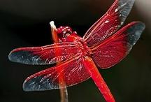 Dragonflies, Butterflies & Ladybugs