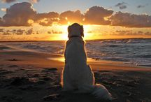 Pet Friendly Vacations / Everything you need to know about having the best pet friendly vacation! Don't leave your furry four legged family members behind...bring them with you to enjoy a beach vacation! We have several properties that will accommodate your beloved dog (or dogs) so check out our website and plan your vacation today >> www.AccessTheBeach.com