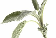 Home - Herbalism