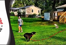 Gallery by Taking the Lead K9 Training / With years of experience in the field, our certified dog trainers have been offering the highest quality techniques to each customer that comes through our doors. Our services are customized to fit the needs of your canines best and provide help in multiple areas at almost every stage of their lives. Our professional trainers will create a comprehensive training plan, incorporating the history and traits of your dog's breed, to help in improving your buddy's overall obedience, manners, health.