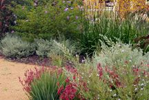 Native australian garden design