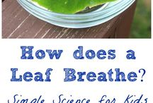 Science - how do leaves breathe