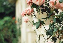 •Flora•