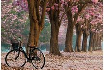 Bicycle Beauty / Bicycles in pretty scenes