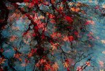 Otoño - Autumn