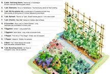 idee per orto in casa