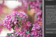 Lightroom Tips & Tricks