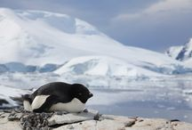 World Penguin Day / In honour of our flightless friends this World Penguin Day!