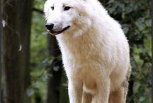 Krásne zvieratá