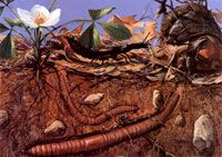 Building Fertile Soil