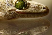 Reptiles y Anfibios / by Pilar Ugarte