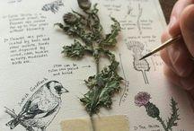 natur drawing and journaling