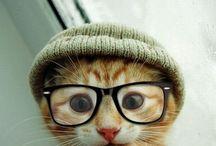 cute critters / by Denise Fiedler