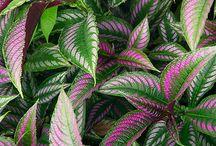 PLANTS COLORING