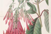 Plantas ilustración