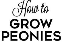 gradina si sfaturi- garden end tips