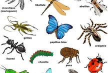 Insectes / by Cybel Charpentier