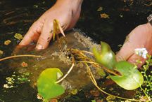 Waterplanten - Water Garden Plants and Fish Pond Plants / Waterplanten voor de vijver