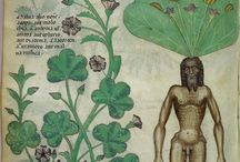 Manuscripts / Various details from manuscripts, pretty, interesting, odd, funny. Mainly medieval, but also other.
