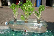 cultivos hidroponico