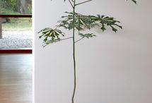 Växter och krukor