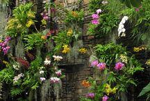 Muro de orquídeas