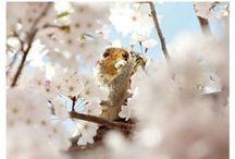 Veverițe