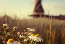 Holland ♥