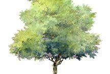 alberi belli