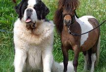 Cães e Coelhos