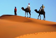 Morocco Travel Agency / The Erg Chebbi, the name of these sand dunes, is said to have some of the highest dunes in Morocco. Indeed, the dunes and the desert wildlife are impressive.